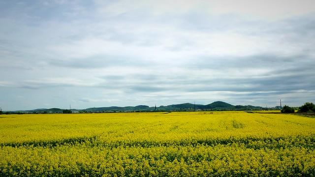 Widok w kolorze żółtym