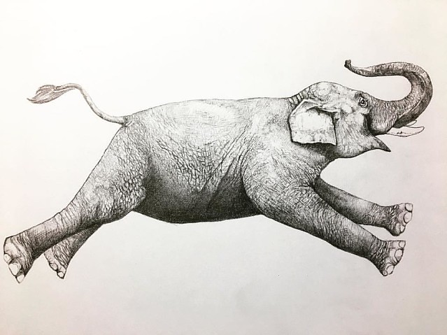 Almost done my latest drawings for #betones underwear design.     鉛筆での描き込み終了!batonesさんの新作アンダーウェアデザインになる予定です!象の他にあと2種類描きます。お楽しみに!  #instaart #instadraw #elephant #lesstalkmoreillustration #pencil #pencildrawing #sketching #sketch #ゾウ #ぞう #象 #絵描き #絵描き人 #スケッ