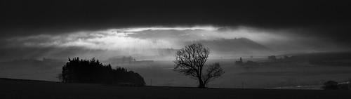 alba culteuchar perth scotland strathearn westercairnie dawn fog mist rays sunrise tree unitedkingdom