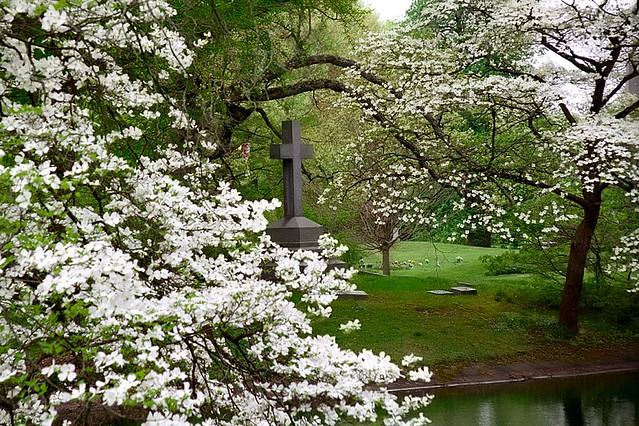 "Cincinnati – Spring Grove Cemetery & Arboretum ""Cross Inside White Dogwoods"