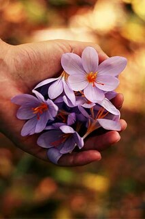 Bloom In Hand