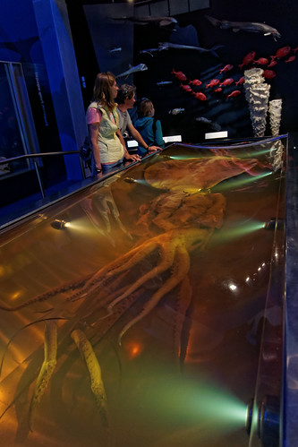 Gigantyczna Kałamarnica | The Colossal Squid Exhibition | by addictedtotravelpl