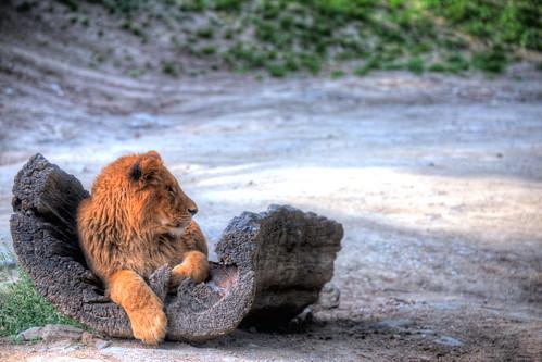 Gunma Safari Park   by @ND