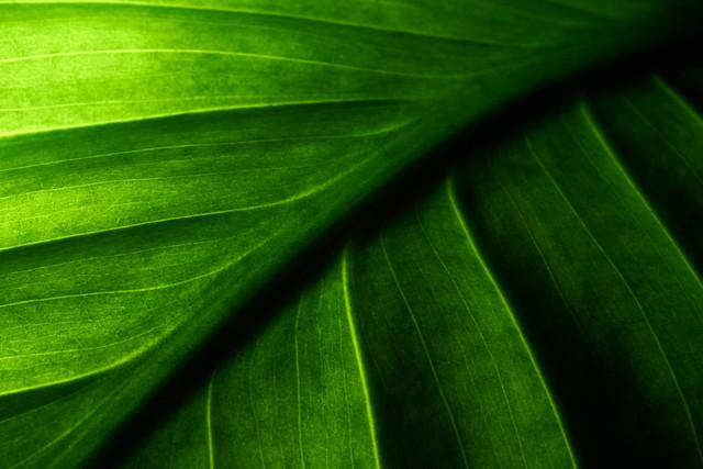 Nuances de verts