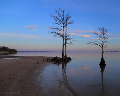 colonial parkway jamestown williamsburg virginia va jamesriver river water bald cypress sunset