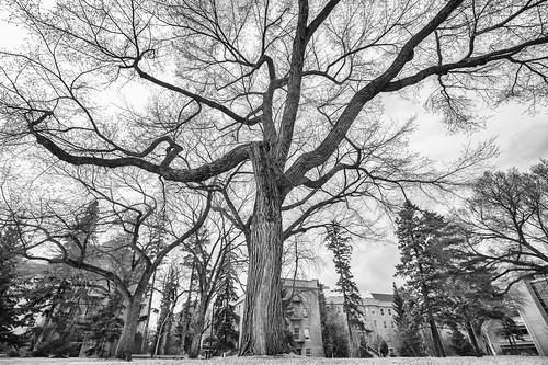 Spring Time at University of Alberta