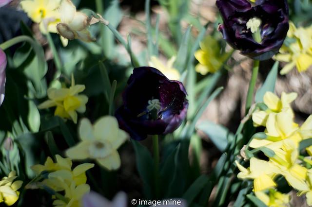 openn bloom