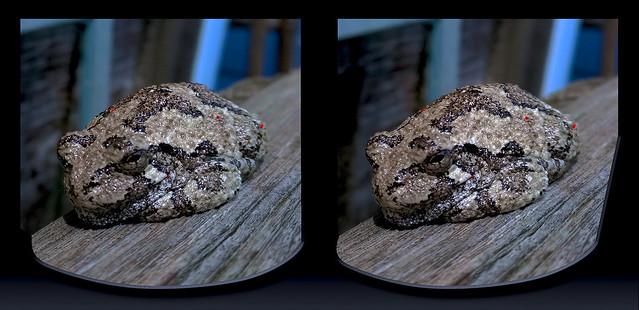 Tree Frog Visit 1 - Parallel 3D