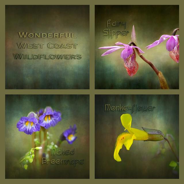 wonderful west coast wildflowers . . .