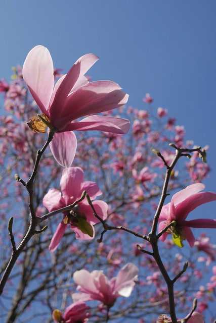金, 2017-04-14 15:11 - New York Botanical Garden (Bronx)