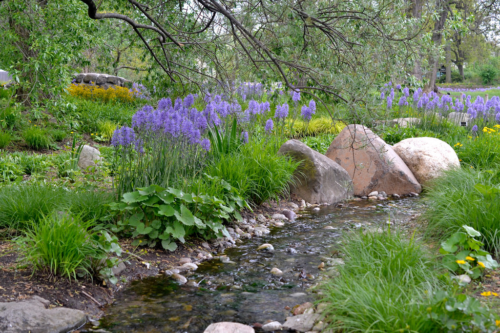The Water Garden at BBG, with rocks, and flowers on the banks of the flowing stream.
