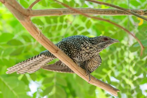 nature nikond610 karnataka india