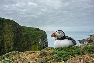 Incredibly rare shots of an Atlantic puffin were taken by photographer Sam Hobson on the Sony RX10 III, which features an extended 600mm super-telephoto zoom lens and silent shutter capability, to ensure the endangered animal was not disturbed | by Fotoblog.hu