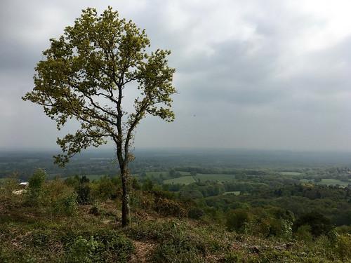 Pitch Hill Holmwood to Shamley Green walk