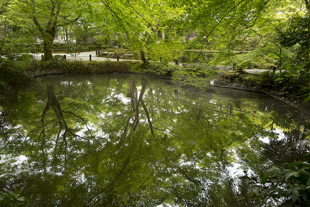Early Summer Reflections