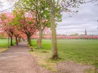 The Meadows HDR | by MikeAncient