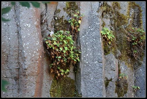 Anciennes coulées basaltiques  34300477745_861b3b5a8a