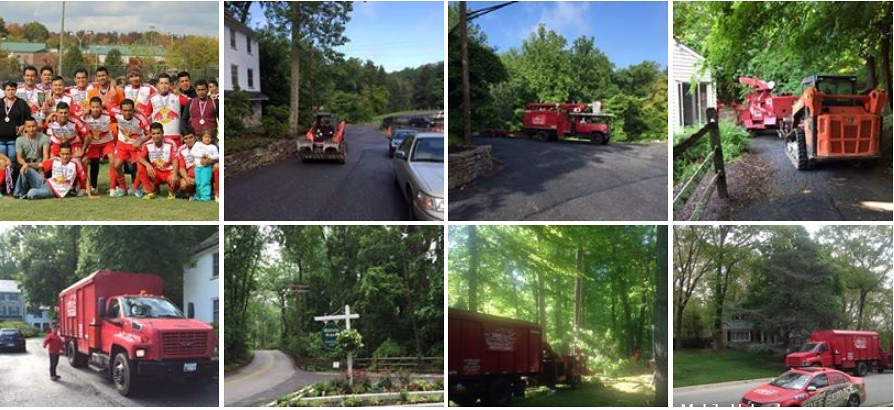 Tree Trimming & Tree Service in Pasadena, Maryland