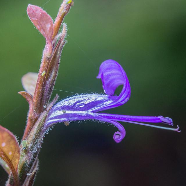 Pests on purple