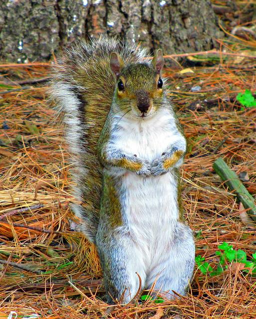 anothersquirrel