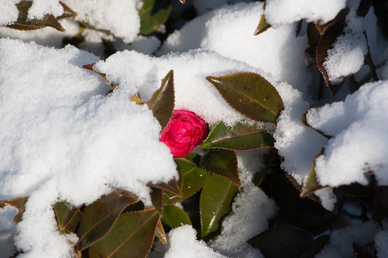 雪の降った伊豆大島