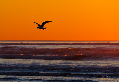 glow sunset nature reflection canon evening orange sea sun oregon water sky pacificnorthwest silhouette ocean sealife seascape waves dusk pacific seaside unitedstates us