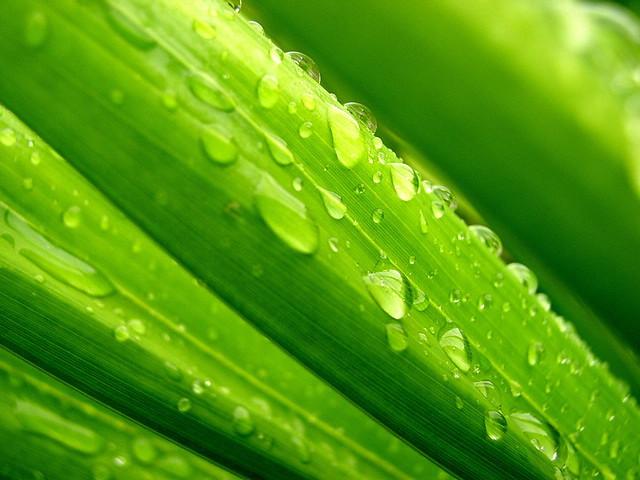 Feuille palme goutte d'eau