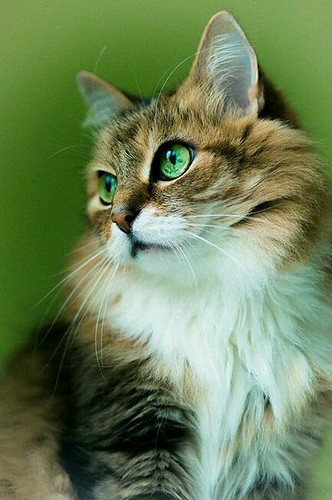 #cats | by beamaceo