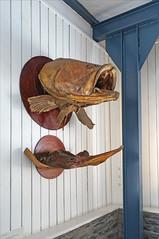 La salle sur les mondes marins (musée de Mayotte)