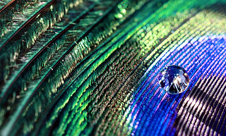 Feather Droplet | by SC-Creations