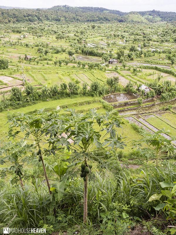 Indonesia - 0061