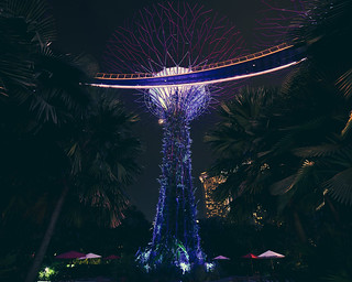 ♪ Supertrees just wanna have fun ♫