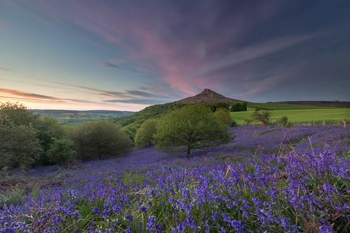 bluehour sunset tramonto bluebells flowers landscape northyorkshire northyorkshiremoors northyorkshiremoorsnationalpark greatayton uk greatbritain