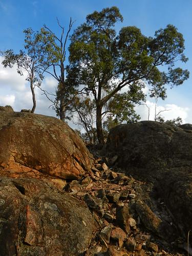 western australia bannister landscape eucalyptus tree rock bush sky cloud dana iwachow nikon s9200