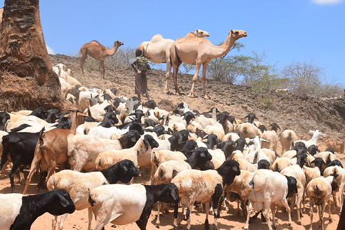 Pastoralism | by International Livestock Research Institute