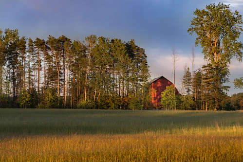 canoneos5dmarkiv camp field hay hayfield grass treeline border barn sundown sunset atardecer redbarn low angle canon trees michigan mi midmichigan midland