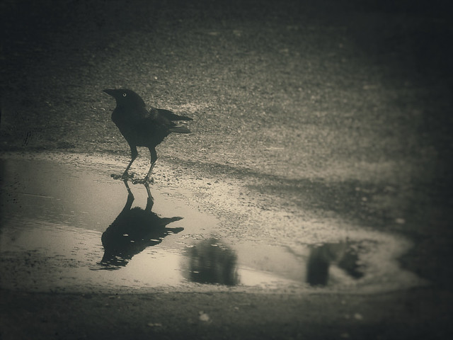 Week 17: Pinhole - The Raven
