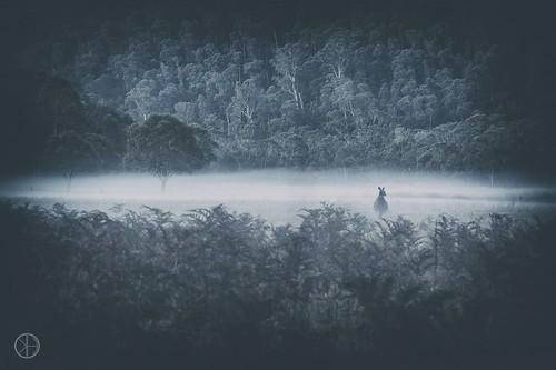 australia nature sight kangaroo mist fog damp forrest white kosciuszko national park green dusk tree australië natuur kangoeroe uitzicht avond zonsondergang dauw avonddauw avondmist blauw boom wit bos bergen nationaal nieuw zuid wales groen bomen takken water vocht druppels bijzonder indrukwekkend