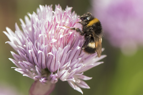 BEES_06