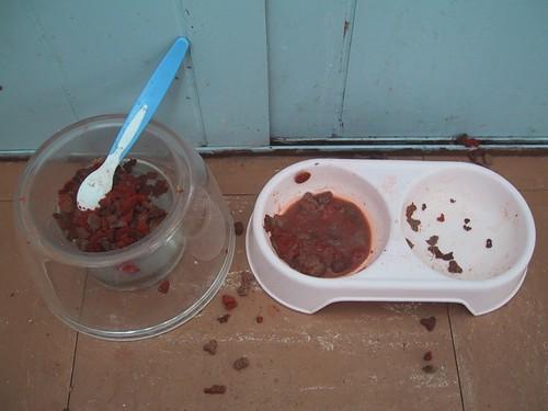 Cat Food Delight: naughty Joshy | by gemsling