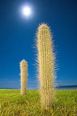 Moon & Cactus - Night Shot | by memoflores