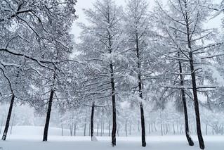 寒さの在り様   by hiroching