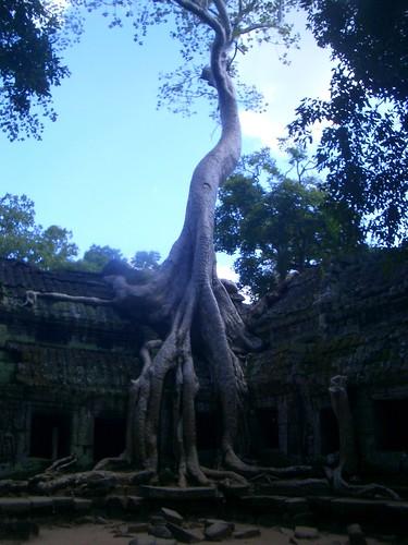 Ta Prohm, Angkor   by Kenny McColl