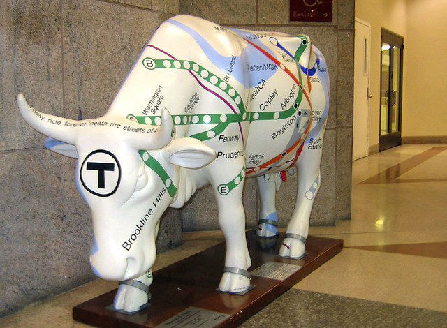The Transit Cow?