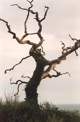 Old tree | by aixcracker