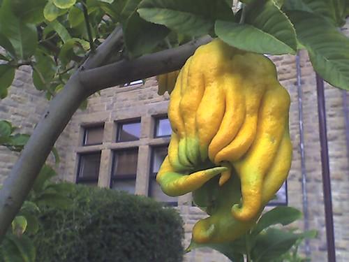 cthulhu lemon
