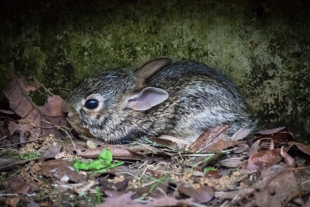 Scared little wild rabbit | timeuser | Flickr