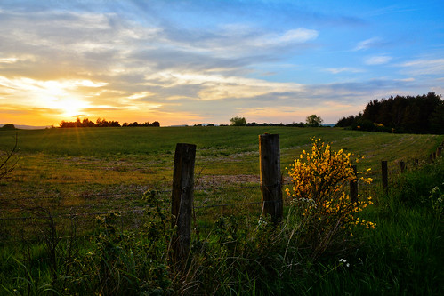 kinclaven kinclavenwoods perthshire sunset scenery scottishscenery scotland scottish outdoor landscape