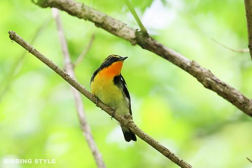 BIRDING STYLE + 野鳥写真 cover image