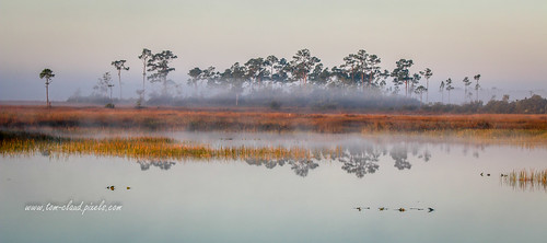morning fog foggy water marsh trees reflection reflect landscape nature mothernature outdoors outside pineglades naturalarea pinegladesnaturalarea jupiter florida usa